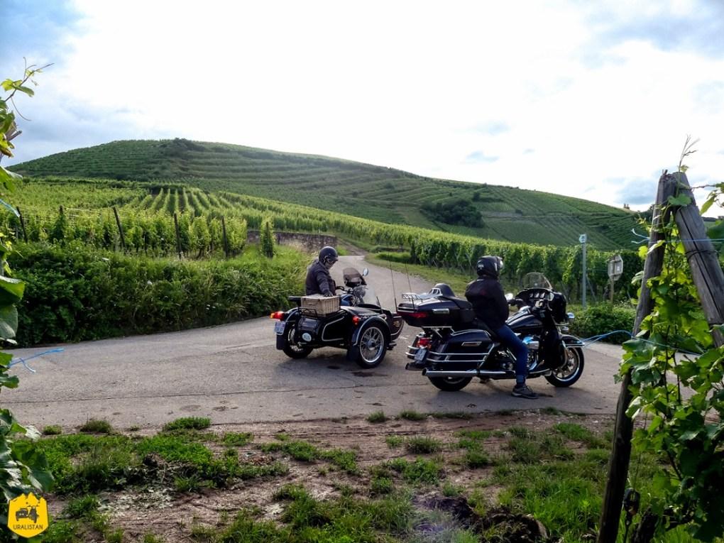 Vignoble alsacien - Voyage moto dans les Vosges sud et en Alsace - URALISTAN
