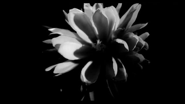 Предметная видеосъёмка чёрная циклорама