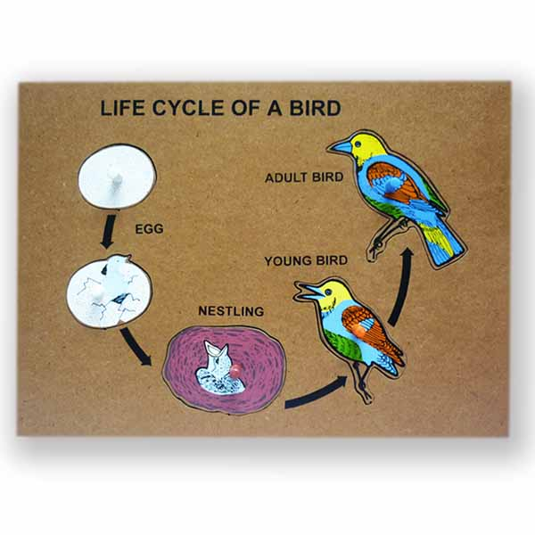 bird life cycle diagram wiring of a 3 way switch process animal cycles webquest birds