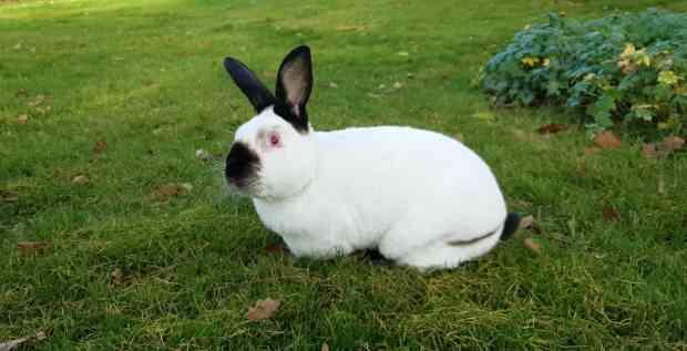 Guide til at fjerne flåt fra kanin