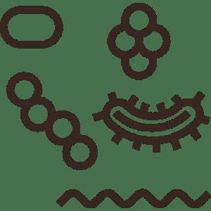 Enzyme & Mikroorganismen