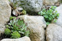 Build a Rock Garden in a Day