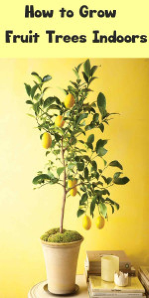 How to Grow Fruit Trees Indoors