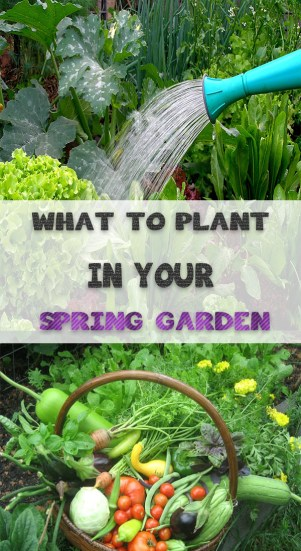 WHAT TO PLANT IN YOUR SPRING GARDEN 2