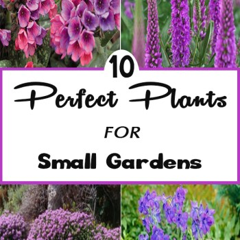 10-Perfect-Plants-for-Small-Gardens-350x350