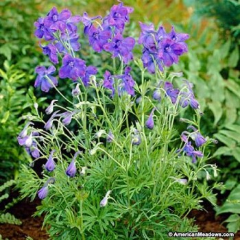 10-Perfect-Plants-for-Small-Gardens11-350x350