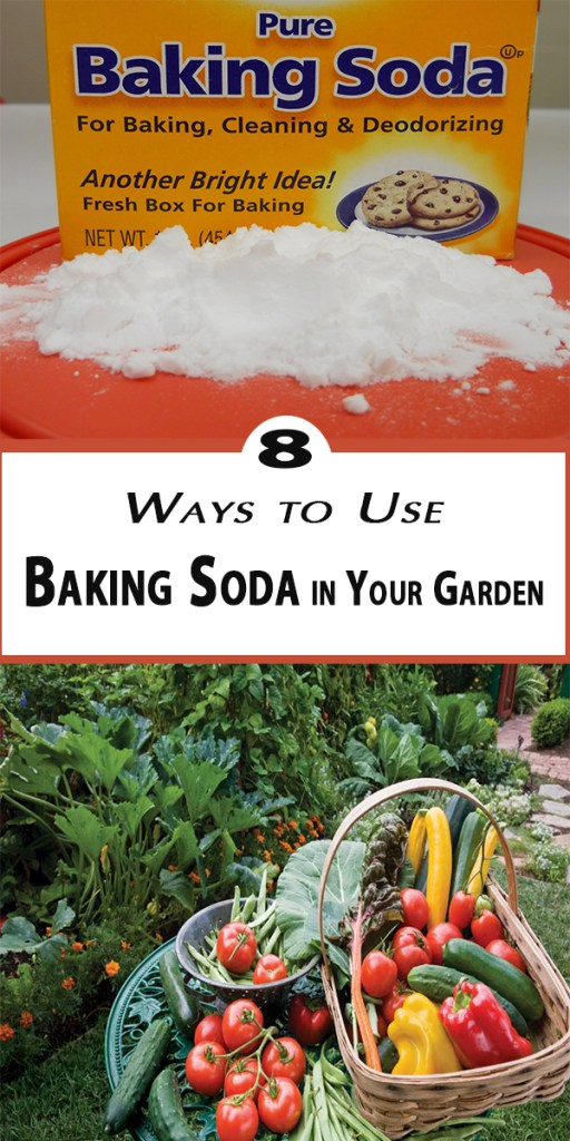 8 Ways to Use Baking Soda in Your Garden