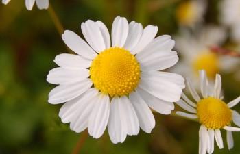 medicinal-plants-to-grow-at-home