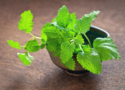 10 Medicinal Herbs You Can Grow At Home