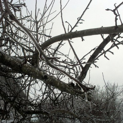 Icy branches.