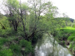 Dairy Creek