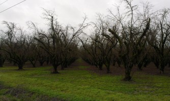 The orchards of the Willamette Valley.