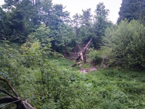 the-secret-ravine-source-of-wilkes-creek-wilkescreek-wilkescreekheadwaters_26685547055_o