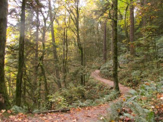 a-nice-impression-of-the-wildwood-trail-as-it-winds-its-way-up-to-pittock-mansion-wildwoodtrail_29957118883_o