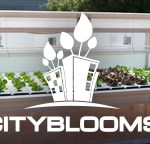 City Blooms
