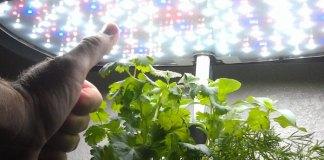 Indoor Vertical Farming Jim Pantaleo