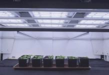 Valoya LED grow lights