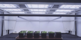 Valoya LED grow lights