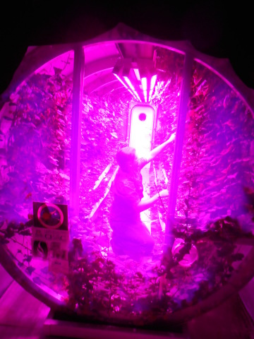 University of Arizona and Philips Lighting collaborated to create improved lighting for plant production in Mars-lunar greenhouses. (Photo: Business Wire)
