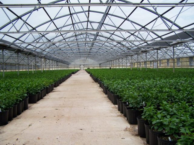 MISSION-texas-greenhouse-for-sale