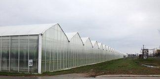 Greenhouses-Mastronardi-produce-canada-dan-charles-npr
