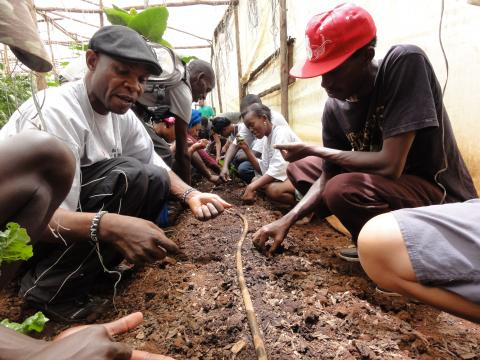 Mazingira Institute-Youth learning how to seed a green house during international youth exchange held in Nairobi