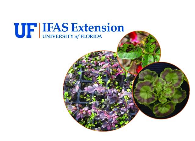 University-of-florida-greenhouse-training-online-course