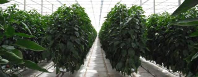 richard-billekens-glass-covered-greenhouse-copy