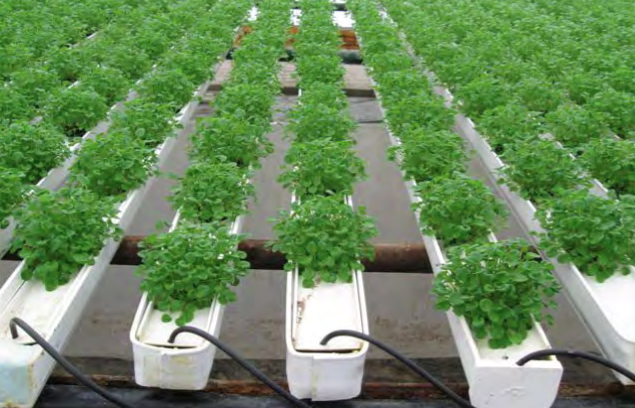 Herbs and microgreens can be grown in an NFT gutter system. Photo courtesy of Jiffy Products of America.