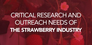 strawberry survey