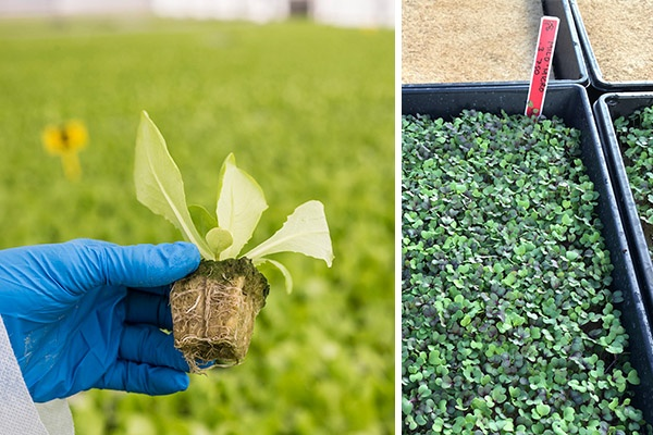 Choosing a substrate for hydroponic production