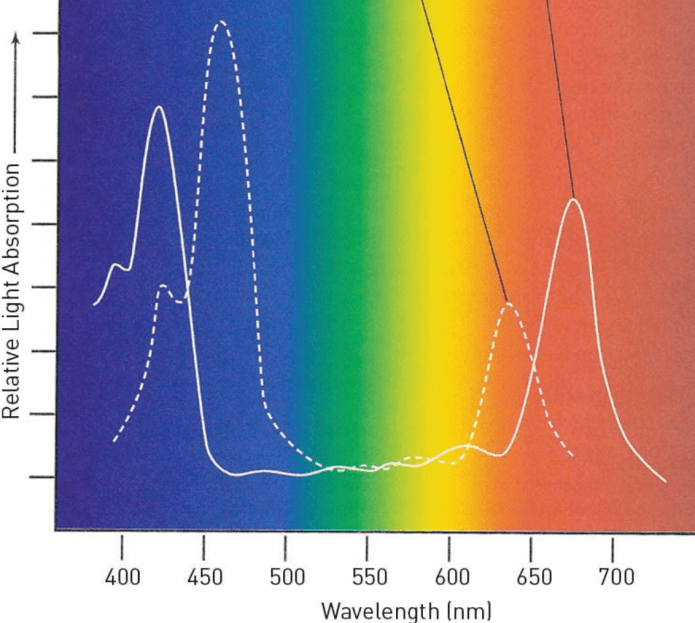 All You Need to Know About Light Spectrum
