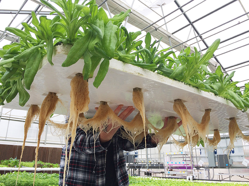 University of Connecticut offers Hydroponic nutrient management and root  health webinar – Urban Ag News