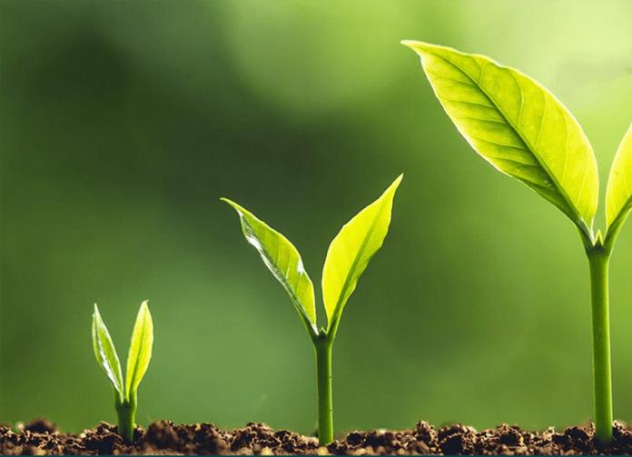 Seeding solutions 2020 FFAR