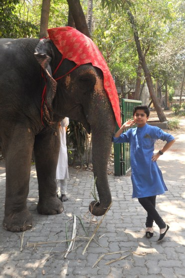 Neel Sethi feeding bananas to a elephant at the Deans Bungalow (3)
