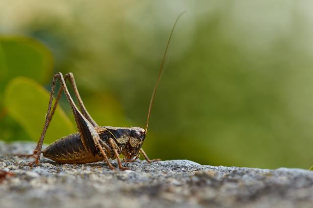 "Photo by <a href=""https://unsplash.com/@wolfgang_hasselmann?utm_source=unsplash&utm_medium=referral&utm_content=creditCopyText"">Wolfgang Hasselmann</a> on <a href=""https://unsplash.com/s/photos/crickets?utm_source=unsplash&utm_medium=referral&utm_content=creditCopyText"">Unsplash</a>"