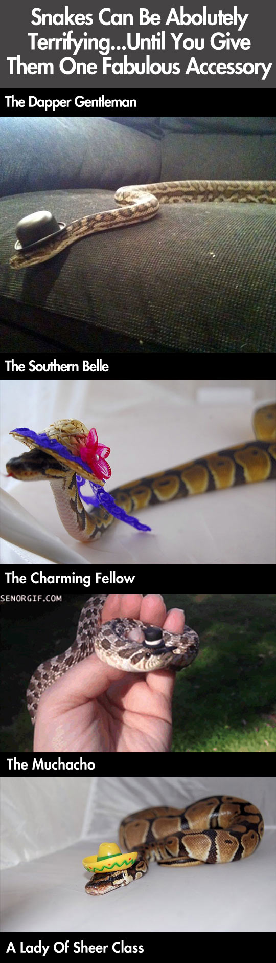 SNAKES-CAN-TERRIFYING...