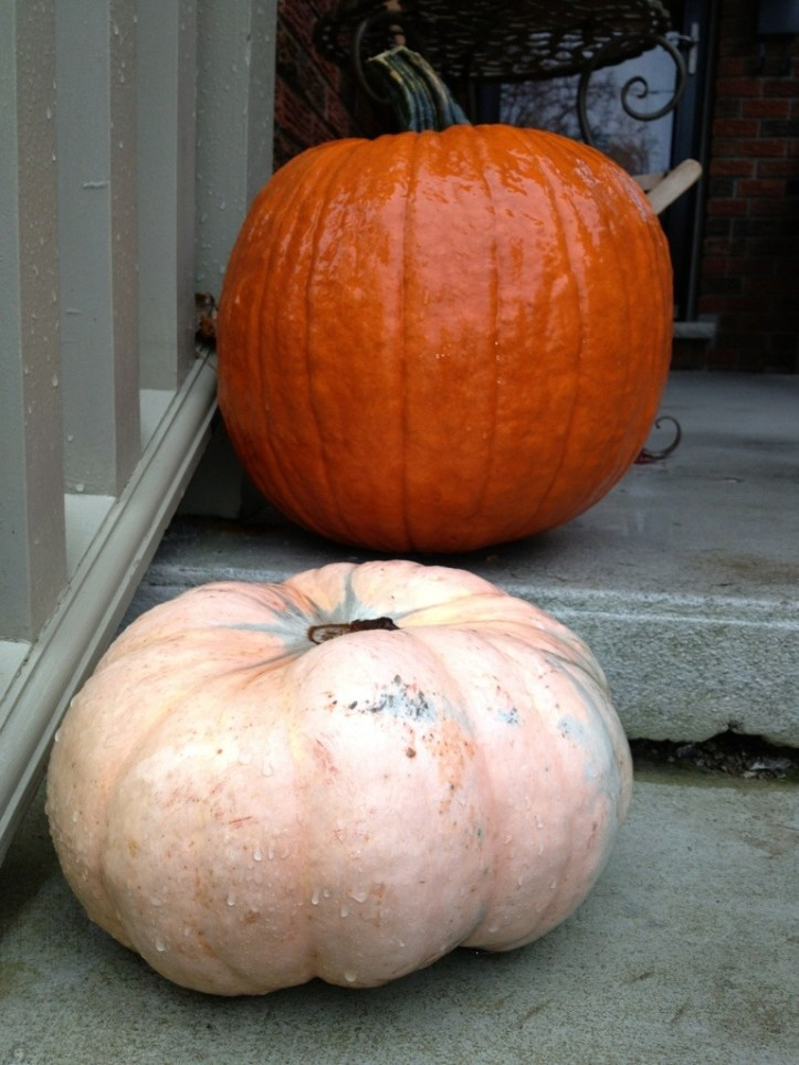 Pumpkins on Steps ❘ © UrbanCottageLife.com