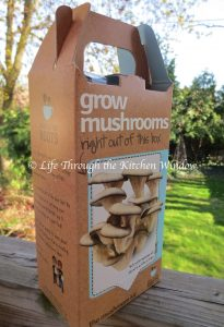 Oyster Mushroom Kit | © Life Through the Kitchen Window