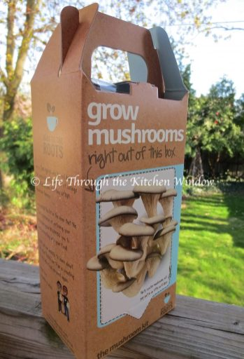 Oyster Mushroom Kit | © Life Through the Kitchen Window