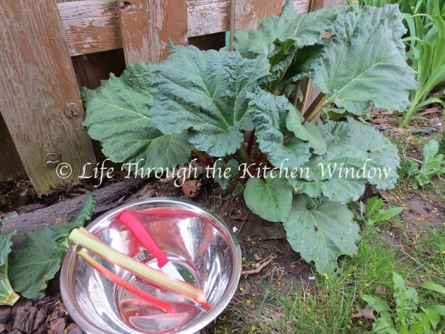First picking of the rhubarb | © Life Through the Kitchen Window