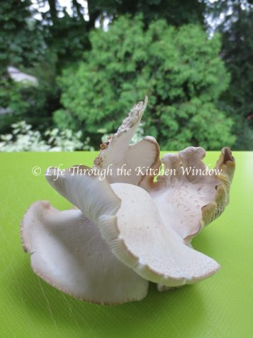 Just Picked Oyster Mushroom | © Life Through the Kitchen Window