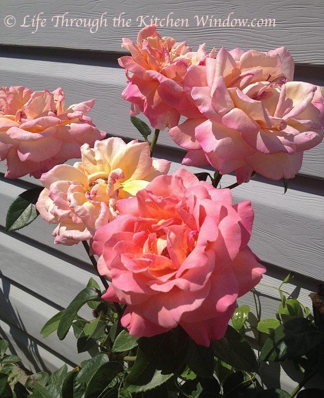 Mom's Roses | © Life Through the Kitchen Window.com