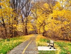 Autumn Leaves: Gold | © Life Through the Kitchen Window.com