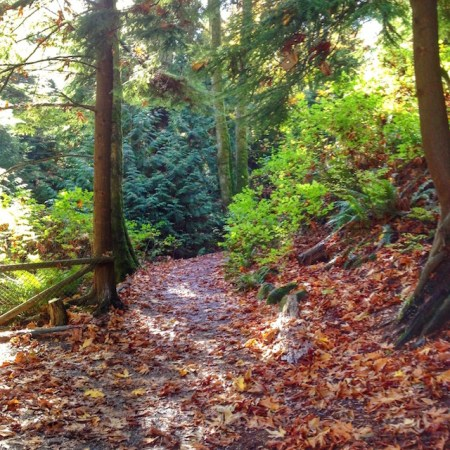 A Path Beckons in Stanley Park October 2014 | © Marlene Cornelis
