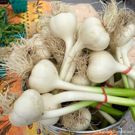 Organic Onions | © Marlene Cornelis