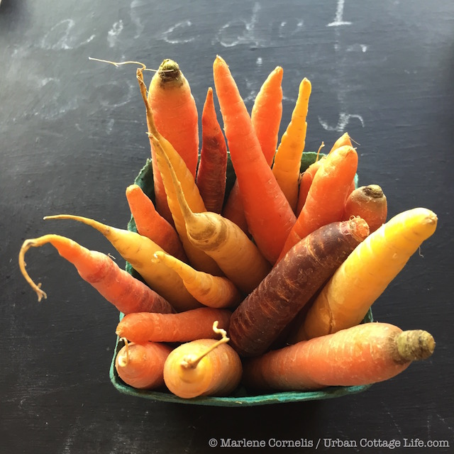Carrots & Light | © Marlene Cornelis / Urban Cottage Life.com