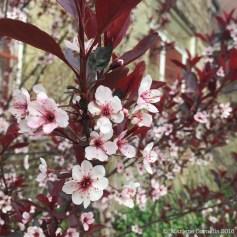 Spring Blossoms | © Marlene Cornelis 2016