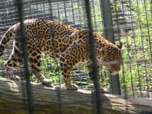 Happening Zoo . Urbaneukraine