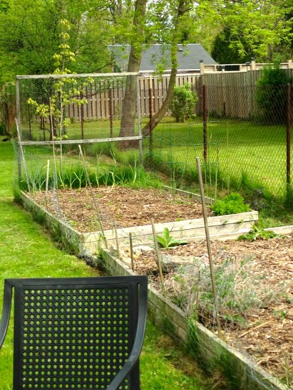 veggie garden before